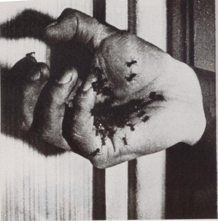 Un perro andaluz (Luís Buñuel, 1929) (2/3)